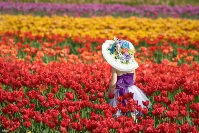 我和春天有个约会 邂逅宝泉郁金香踏青赏花节!